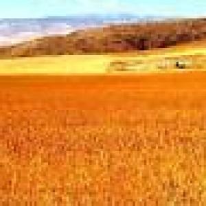Buğday Tarlası – Anlatı – Eliz Başaran