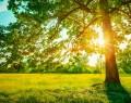 Saçtıkça Çoğaldı – Yaşar Atan (şiir)