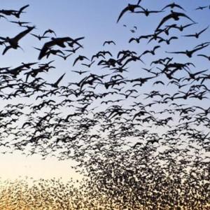 Bu Kuş Ezgileri Oldukça – Yaşar Atan (şiir)